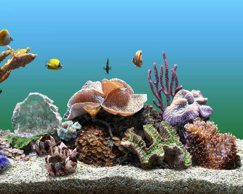 SereneScreen Marine Aquarium 3.1.5563 Portable 3D морской аквариум