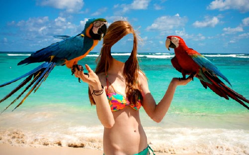 Шаблон для фотошопа - Фото с двумя красивыми попугаями