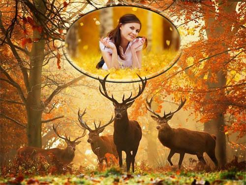 Фоторамка psd - Олени в осеннем лесу