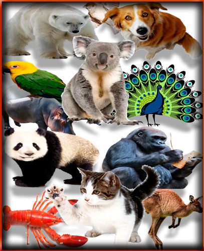 Огромный сборник клипартов - Животные